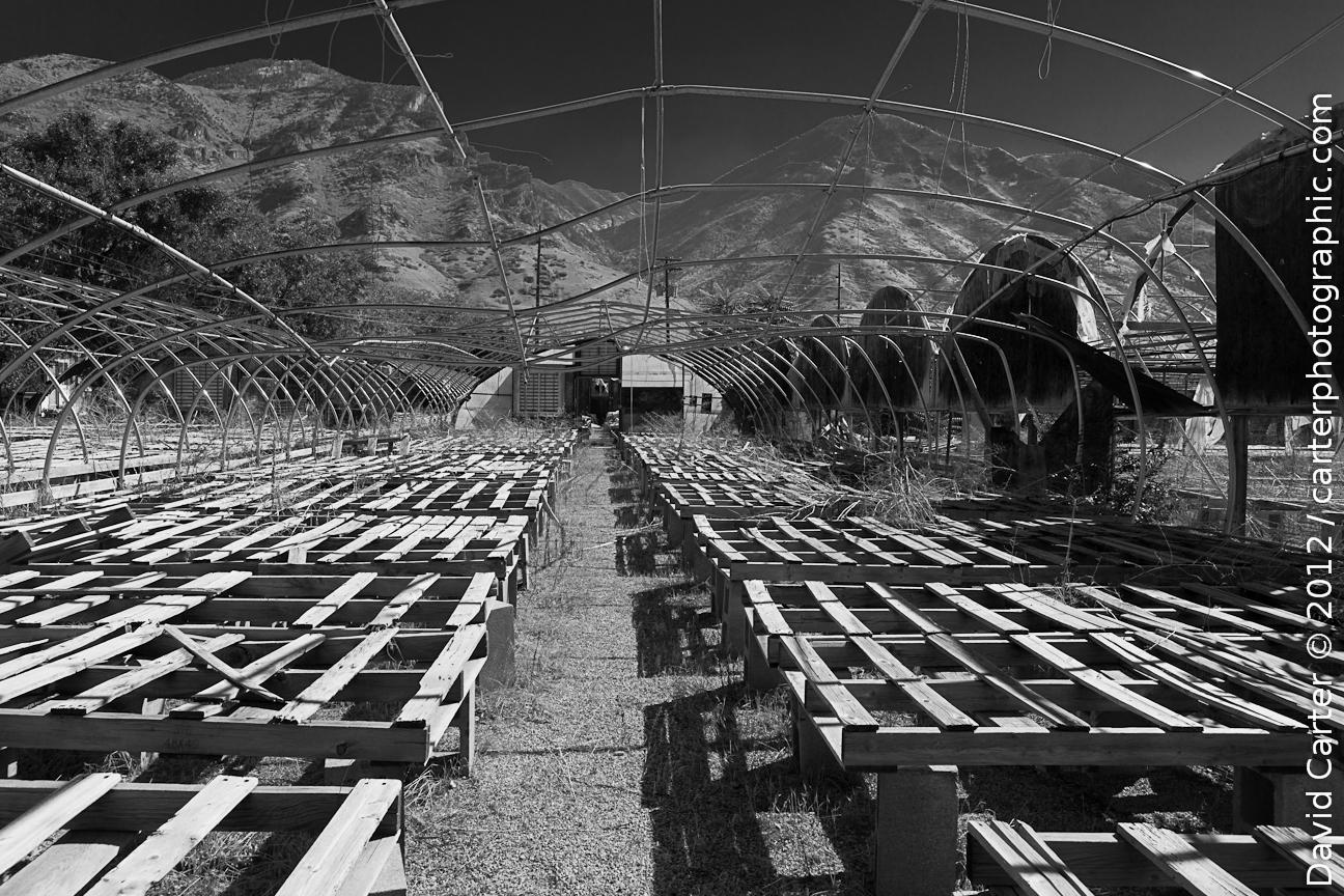 empty beds and shallow graves  u2013 a botanical holocaust